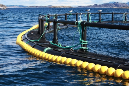 farm structure: Fragment of round fish farm part in Norwegian Sea Stock Photo