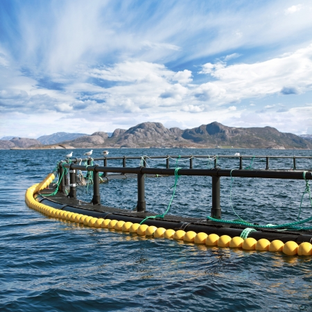 aquaculture: Round fish farm cage in Norwegian Sea