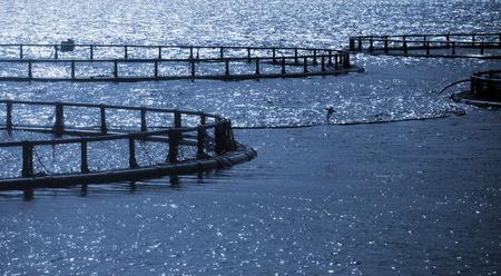 aquaculture: Round cages of Norwegian fish farm for salmon growing