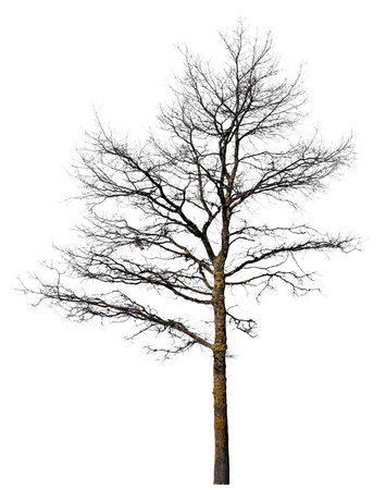 Black tree silhouette without leaves in winter isolated on white