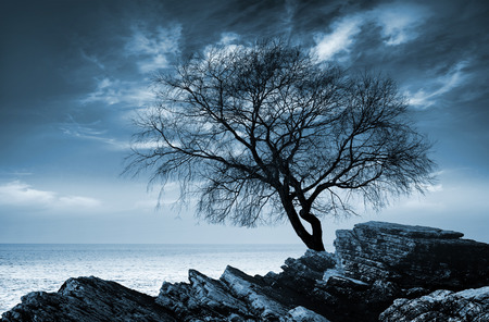 Leafless tree silhouette on rocky sea coast. Monochrome photo photo