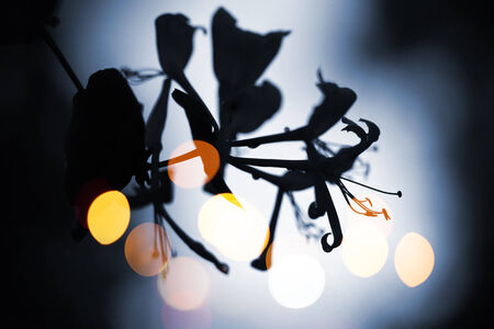 Dark wild flowers silhouette with blurred lights photo