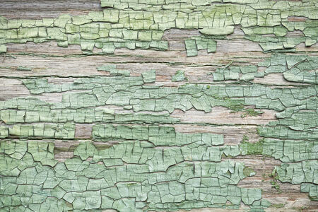 Old green weathered wooden wall with cracked paint photo