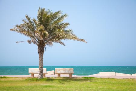 persian gulf: Date tree on the coast of Persian Gulf, Saudi Arabia