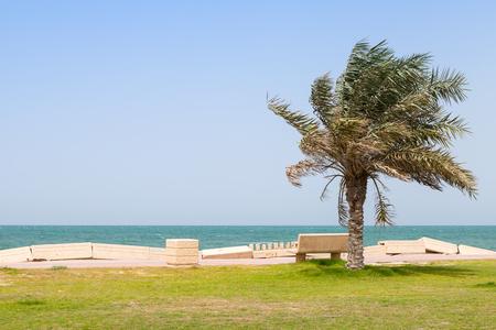 persian gulf: Palm and bench on the coast of Persian Gulf, Saudi Arabia