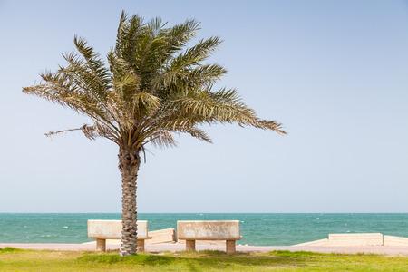 persian gulf: Palm on the coast of Persian Gulf, Saudi Arabia