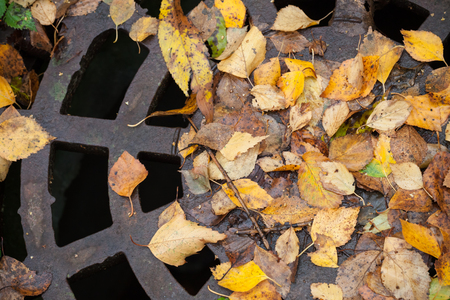 colorful leaves: Drainage sewer manhole in the autumnal park covered with yellow leaves