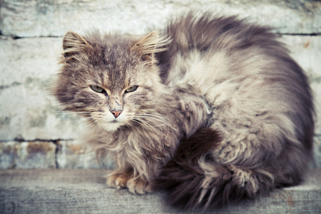 longhair: Gray homeless longhair cat sitting on a bench Stock Photo