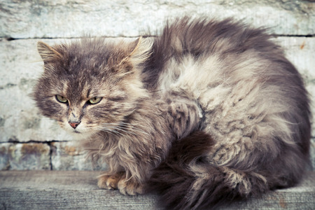 longhair: Gray homeless longhair cat sitting on a wooden bench Stock Photo
