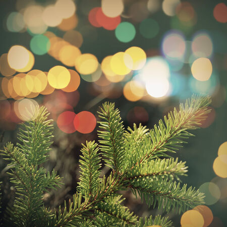light color: Spruce tree branch closeup photo with colorful lights bokeh. Vintage tonal correction filter