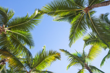 Coconut palm trees over blue sky background