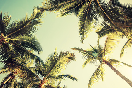 Coconut palm trees over bright sky background. Vintage style. Toned photo with filter effect