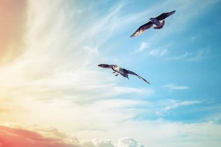 tonal: Seagulls flying on cloudy sky background, colorful tonal correction filter Stock Photo