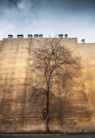 life metaphor: Old leafless tree on old yellow wall background, city life metaphor Stock Photo