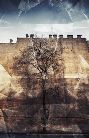 photo collage: Old leafless tree on old yellow wall background, city life metaphor. Retro toned photo collage with chaotic 3d structure