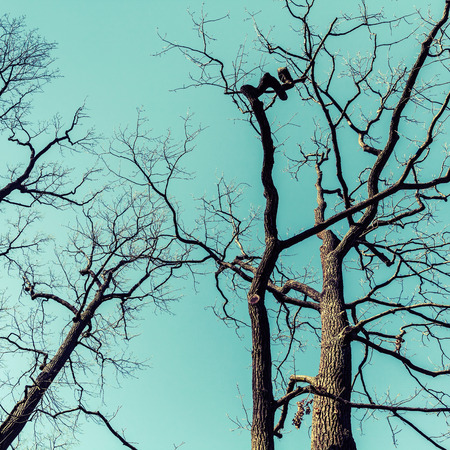 tonal: Leafless dare trees over sky background. Natural background photo, tonal correction filter effect, vintage style