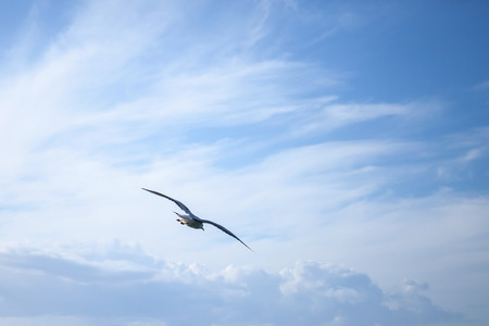 blue cloudy sky: Big seagull flying on blue cloudy sky background Stock Photo