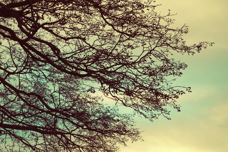tonal: Bare tree branches over cloudy sky background, vintage toned photo with retro style tonal filter Stock Photo
