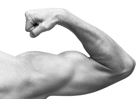 bonhomme blanc: Bras m�le forte montre biceps. Close-up noir et blanc studio photo isol� sur blanc