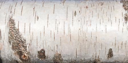 白樺樹皮、クローズ アップ背景テクスチャ 写真素材