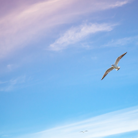 tonal: Seagulls flying on bright cloudy sky background, colorful tonal correction filter