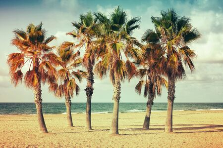 tonal: Palm trees grow on empty sandy beach in Spain. Vintage style. Photo with old style colorful retro tonal photo filter correction, instagram old style Stock Photo