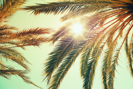 Palmen und strahlende Sonne über hellen Himmel im Hintergrund. Vintage-Stil. Getönten Foto mit Vintage bunten Klangfilterwirkung, Instagram alten Stil