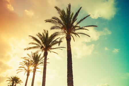 Palm trees and shining sun over cloudy sky background. Vintage style. Photo with colorful toned gradient filter effect