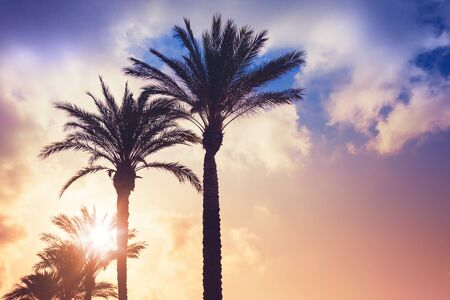 tropical leaves: Palm trees and shining sun over cloudy sky background. Vintage style. Photo with colorful toned filter effect