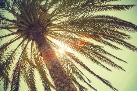 tree branch: Palm tree and shining sun over bright sky background. Vintage style. Toned photo with vintage colorful tonal filter effect, old style Stock Photo
