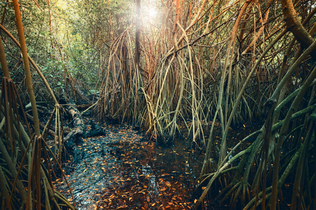 tonal: Wild tropical forest landscape with green mangrove trees and plants growing in the water. Stylized photo with colorful tonal correction filter, and lens flare effect Stock Photo