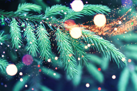 Blue spruce tree branches with blurred lights. Colorful Christmas background photo Standard-Bild
