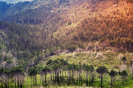 tonal: Wild mountain forest landscape. South of Corsica island, France. Colorful tonal correction photo filter effect