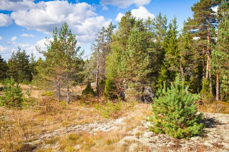 karelia: Wild natural landscape, forest edges in Karelia, Russia