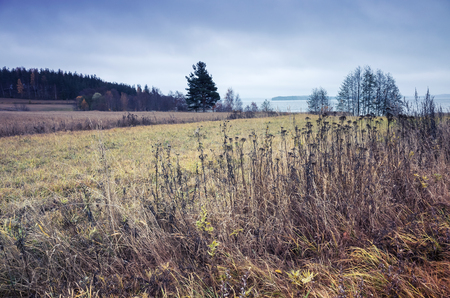 tonal: Dry grass on the edge of the field in Finland, autumn landscape with tonal correction photo filter, retro style