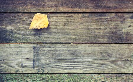 tonal: Yellow autumn leaf lays on a dark gray wooden table made of boards, background texture with retro style tonal correction photo filter effect