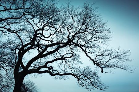 nature photo: Old leafless bare tree over blue sky background. Natural background photo with tonal correction filter Stock Photo