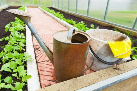 agricultural tools: Agricultural tools, watering can, bucket, yellow gloves in a greenhouse
