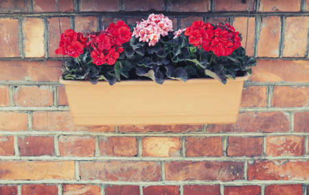 tonal: Decorative flowers in outdoor box hanging on red brick wall. Vintage tonal correction filter effect, old style photo Stock Photo
