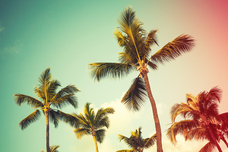 Coconut palm trees over bright sky background. Vintage style, photo with colorful tonal correction filter effect