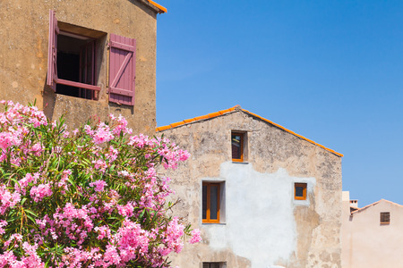 Piana village, Corsica island, France. Decorative pink flowers on the street of old stone living houses