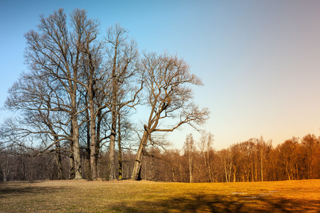 tonal: Autumn landscape with bare trees. Natural photo with colorful tonal correction filter effect Stock Photo