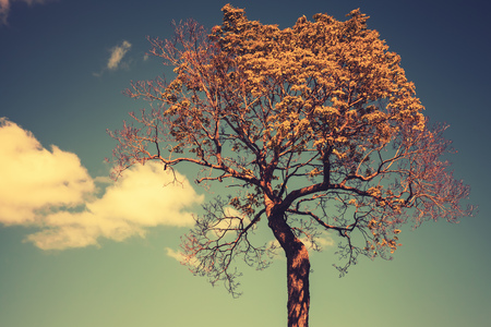 tonal: Bright tree with sky and clouds on a background. Colorful tonal correction photo filter effect, vintage stylized
