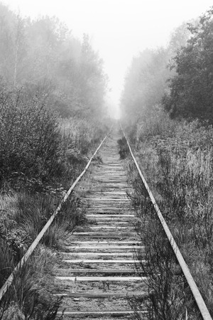 forest railway: Empty railway goes through foggy forest in morning, vertical black and white photo