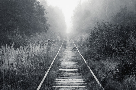 forest railway: Empty railway goes through foggy forest in morning, black and white photo background Stock Photo