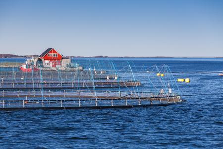 Norwegian fish farm for salmon growing. Sea fjord in Trondheim region