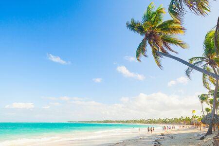 cana: Palm trees on a sandy beach. Coast of Atlantic ocean, Dominican Republic, Punta Cana