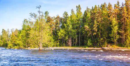 Natural photo background, summer landscape with forest on the river coast, Kotka, Finland