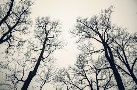 leafless: Leafless bare trees over gray sky. Monochrome background photo with vintage tonal correction filter effect Stock Photo