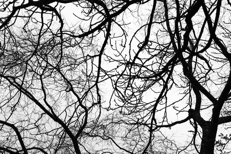 photo of pattern: Leafless bare trees over gray sky background. Monochrome silhouette photo pattern